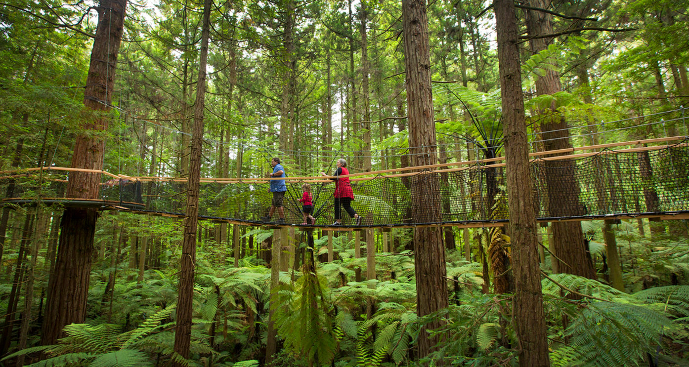 Redwoods Treewalk: The world's longest suspended walkway in Rotorua