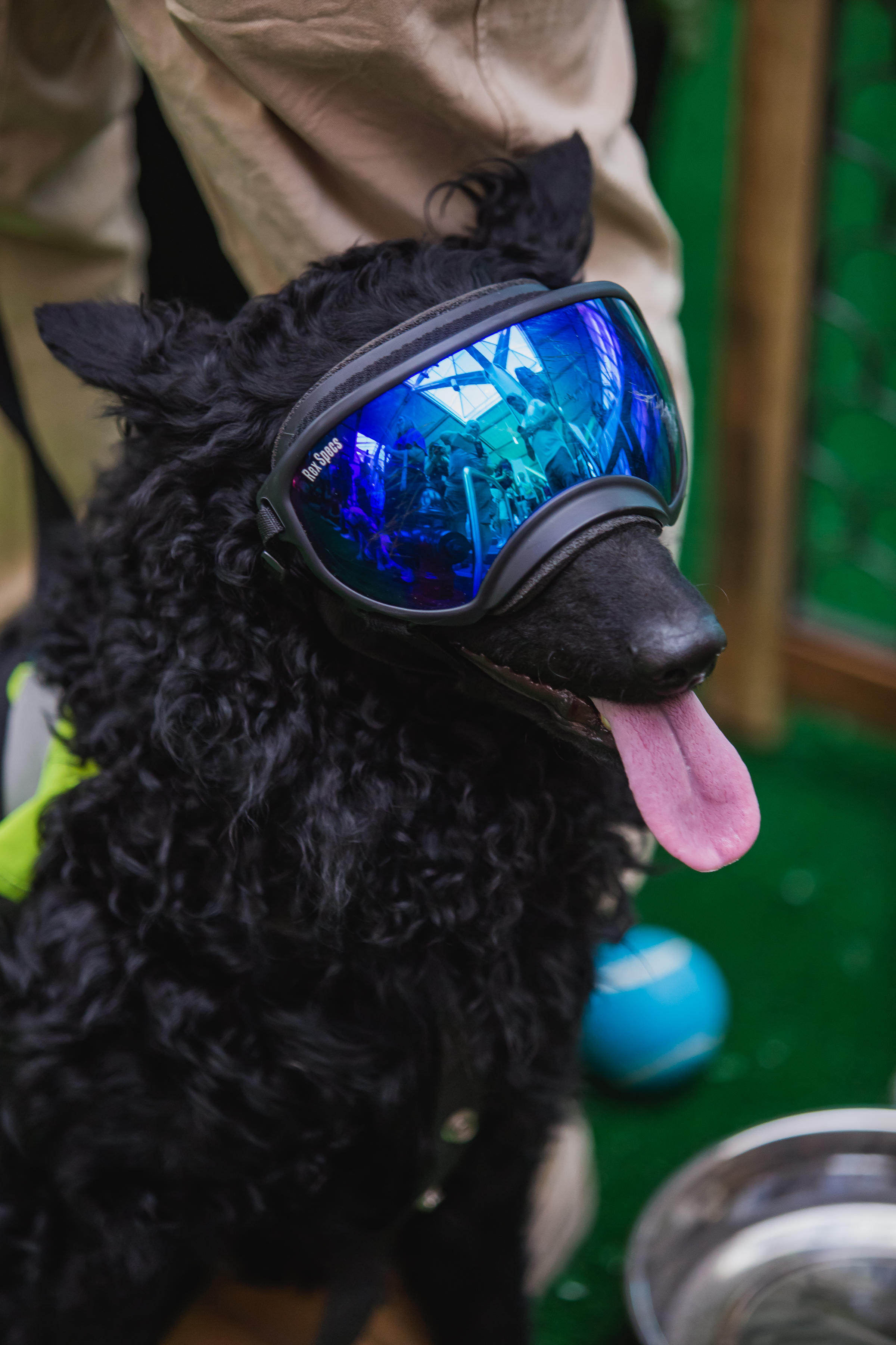 Pilot the dog, part of YVR's wildlife team wearing cool blue dog goggles