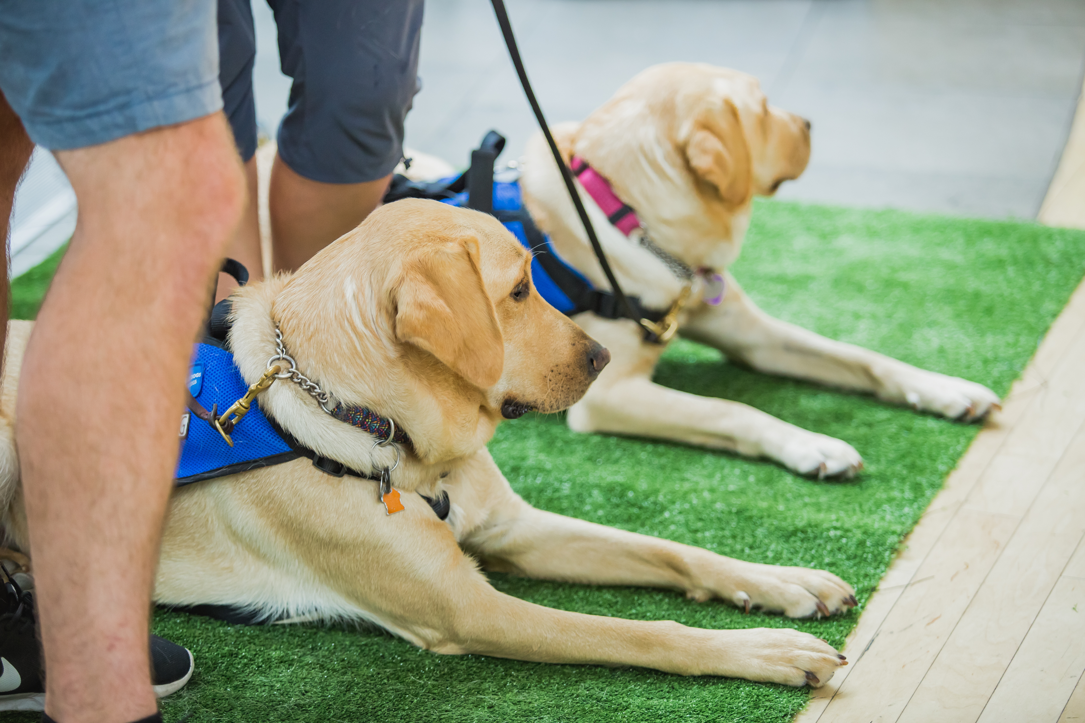 Jay and Bailey with BC and Alberta Guide Dogs